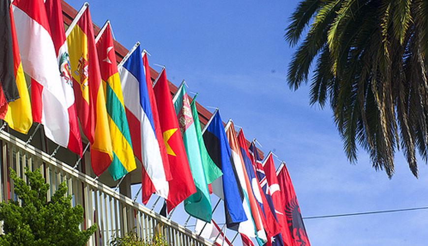 International Relations & Organisations Academy